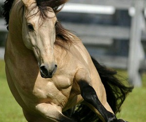 horse, majestic, and paddock image