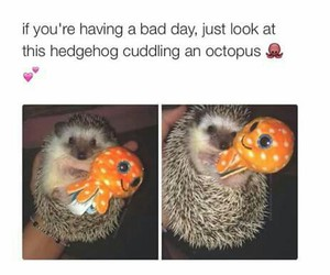 hedgehog, octopus, and cute image