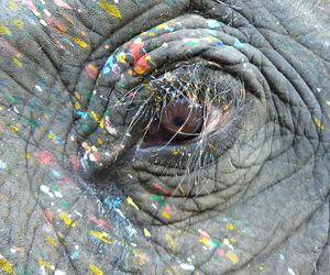 colourful, elephant, and paint image