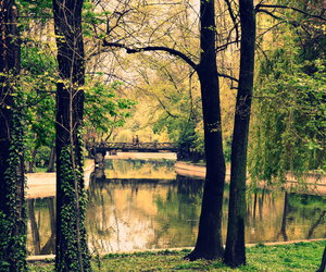 green, nature, and spring image