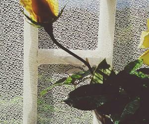 flower, green, and vsco image