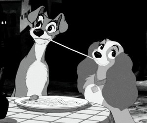 liebe, spagetti, and hunde image