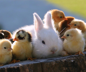 bunny, cute, and chicks image