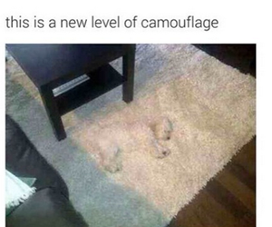 dog and camouflage image