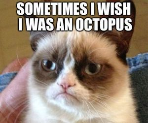 funny, cat, and octopus image