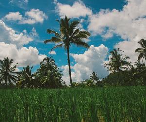hawaii, nature, and ocean image