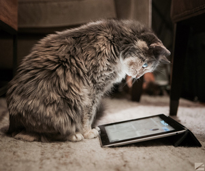 animal, cat, and technology image