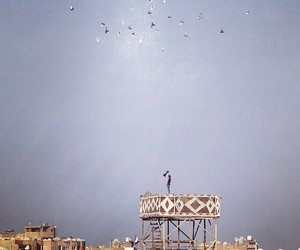birds, cairo, and egypt image