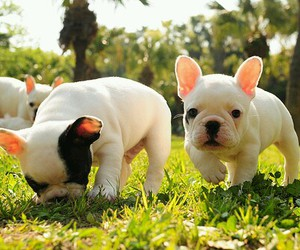 adorable, grass, and pet image