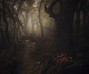 nature, dark, and tree image