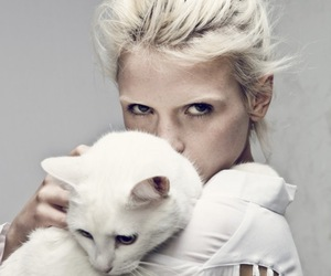 cat, white, and model image