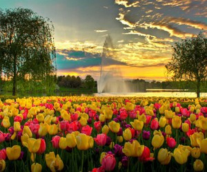flowers, nature, and tulips image