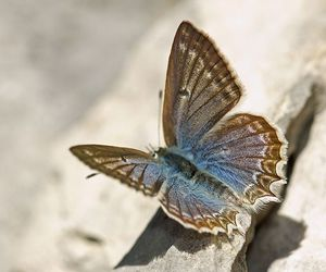 blue, brown, and butterfly image