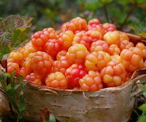 berries, wood, and health image