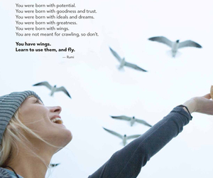 fly, Rumi, and quotes image