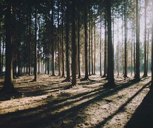 forest, nature, and grunge image