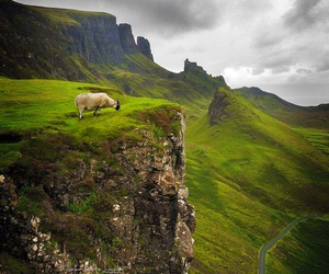 nature, animal, and landscape image