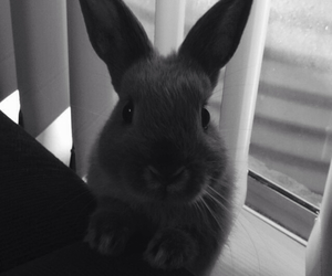 alfie, black and white, and bunny image