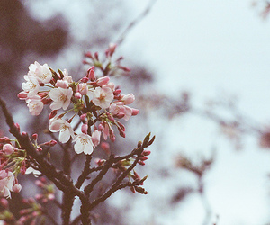 flowers, blossom, and tree image