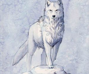 wolf and ice image