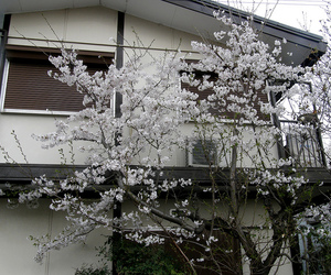 pale, flowers, and tree image