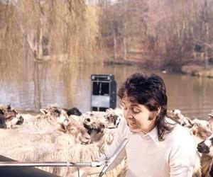 beatles, goats, and Paul McCartney image