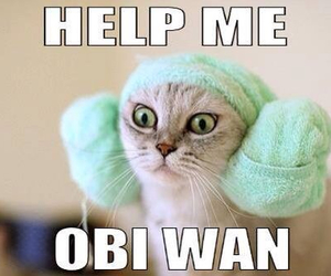 cat, funny, and star wars image