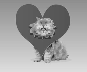 cat, funny, and heart image