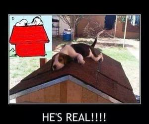 beagle, dog, and funny image