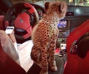luxury, animal, and car image