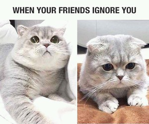 cat, sad, and friends image