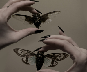beetle, insect, and wings image