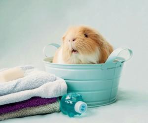 animal, towel, and cute image