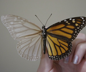 arm, black, and butterfly image
