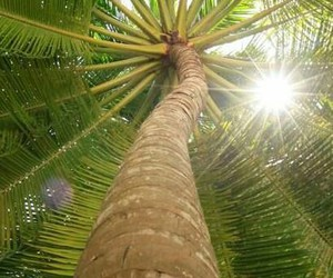 summer, palm tree, and tropical image