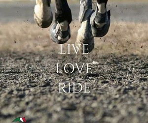 free, horses, and love image