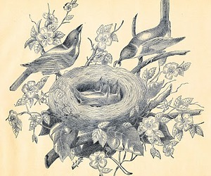 birds and nest image