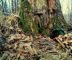 tree forest home image
