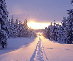 snow, forest, and sunrise image