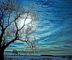 blue, tree, and moon image