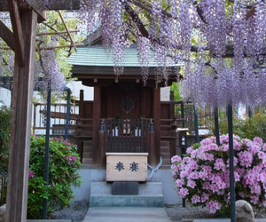japan, flowers, and asia image