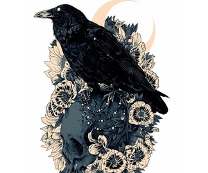 skull, art, and crow image