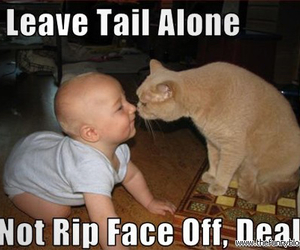 cat, funny, and baby image