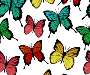 animals, butterflies, and colors image