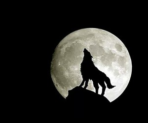 wolf, moon, and dark image