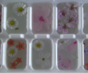 flowers, ice, and pastel image