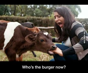 burger, cow, and eat image