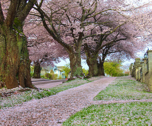 beautiful, spring, and blossom image