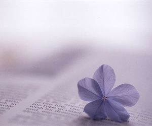 beautiful, flower, and book image