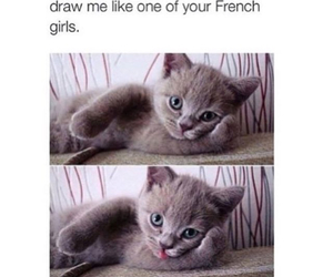 cat and french image